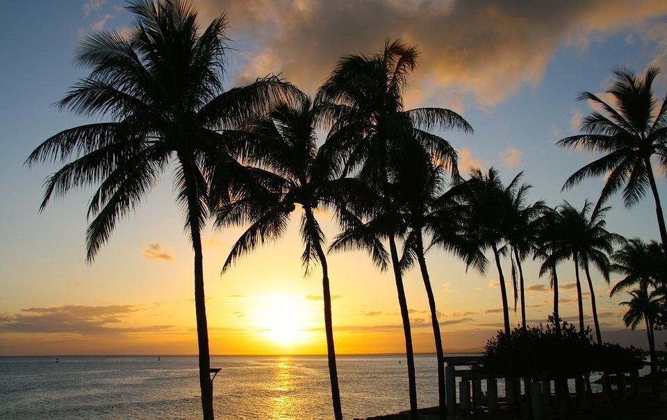 Honolulu CPA